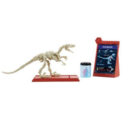Figura-Basica---Jurassic-World-2---Esqueleto-Jurassico---Velociraptor---Mattel